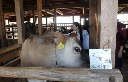 ヤンさん はじめての酪農体験