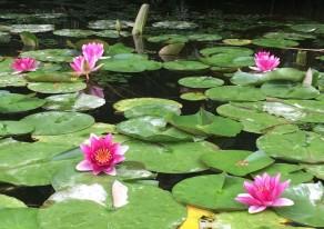 「柏崎の山奥で水上散策」