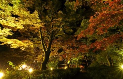 Feel the autumn colors ~秋色を感じながら~