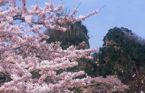 もうすぐ佐渡にも春が来るー!