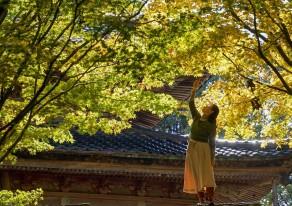 佐渡にいる母を誘って、久しぶりの帰省ドライブ。秋の神社仏閣めぐり