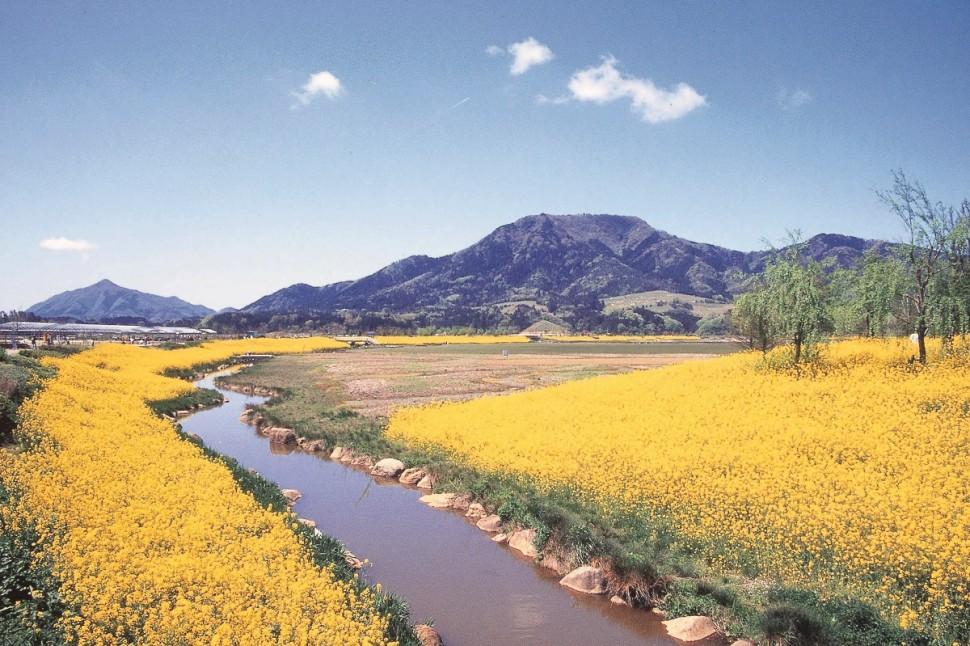 大自然の中で菜の花、地元の名店と名湯を楽しむ新潟市西蒲区ドライブ