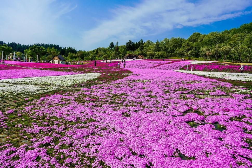 【女子旅】春の花とお洒落カフェめぐり