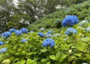 初夏の彩りに会いに、田上へ